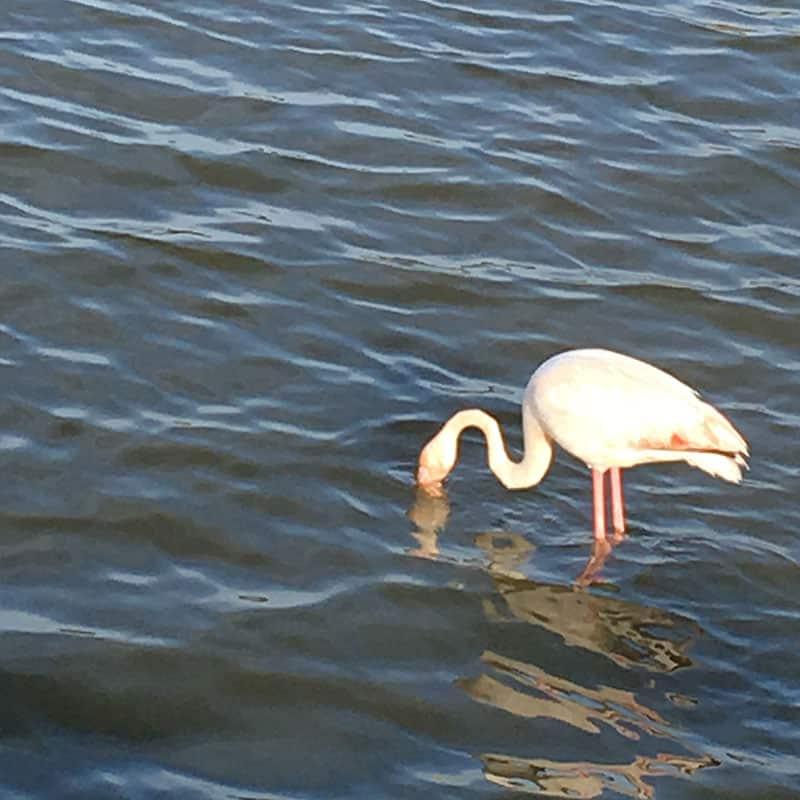 Fenicottero rosa T-shirt flamingo